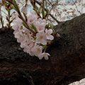 春に現れやすい自律神経症状、うつ状態とは
